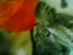 পোঁদ, মাই এর, ব্লজব, হার্ডকোর, ছোট মাই ইংলিশ মুভি সেক্স ভিডিও
